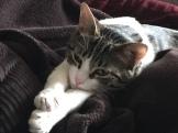 Ippa cozy