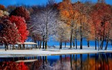 Beautiful Trees Reflection