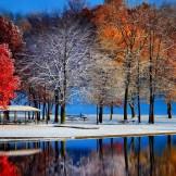 Beautiful Trees Reflection