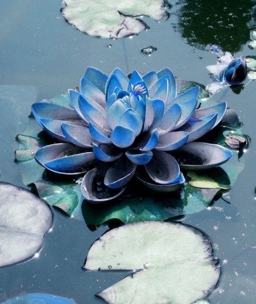 Blue lotus flower kurilane blue lotus flower mightylinksfo