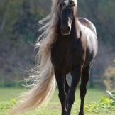 Beautiful Wild Horse