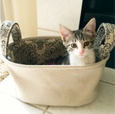 Ippa in a Basket
