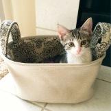 Ippa in a Basket