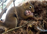 Mamma Squirrel with baby