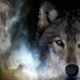 Wolf at Moonlight