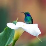 Kiki Bird with Lily