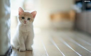 Adorable white kitten