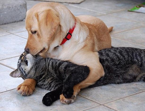 Dog & Cat kissing