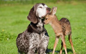 Dog & Deer affection