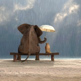 Elephant & Dog In The Rain
