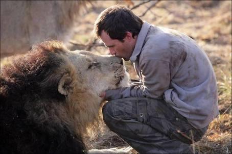 Lion kissing man