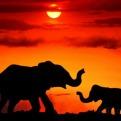 Mom & Baby Elephant