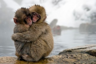 Monkeys hugging
