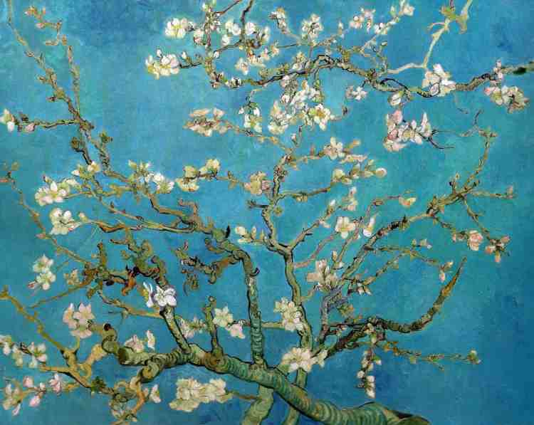 van-gogh-almond-blossoms